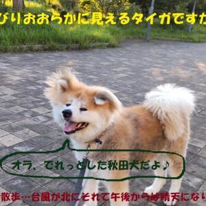 タイガのお手柄!!