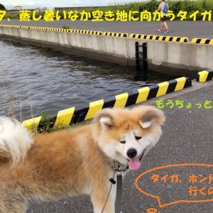 台風でジトジト・・・><