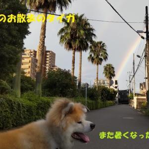 夏空復活!!