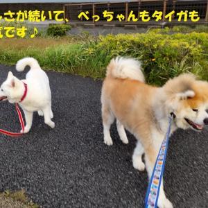 カユミとニオイの元凶発見!!