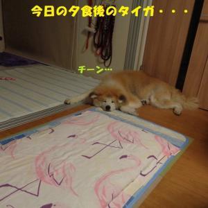 がんばったけど・・・撃沈(-_-;)