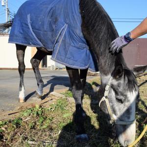 バジファン1歳馬、初めての蹄洗場!今日もできることが増えました!