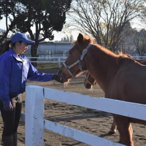 競技会後の個性があふれる馬達の放牧タイム!in東関東馬事
