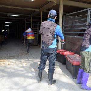 競技に向けて、馬たちが出張へ行ってきます!!in東関東馬事