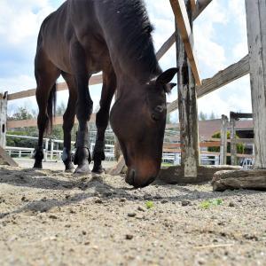 水曜日は休馬日♩馬の癒し写真を届け!