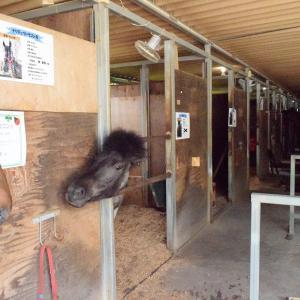 馬事学院(バジガク)令和2年度授業開始目前!馬も、イメチェン!