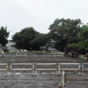 1つの馬場に沢山の馬が大集合!『色々なレッスン』で、技術を磨きます!