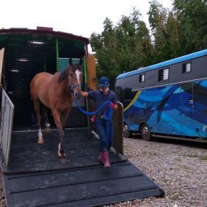 体験して知る馬の学校!馬事学院(バジガク)体験説明会実施!
