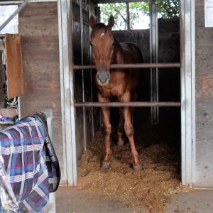 台風接近中!馬の学校でも、台風対策進んでいます!