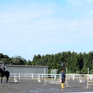 嬉しい晴天!!学校にいる馬たちの過ごし方とは・・・!?