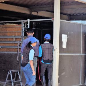 馬の学校で「0歳馬の独り立ち」。母と離れて3日目、刺激たっぷりの1日!