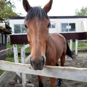 レッスンがお休みの休馬日!馬の学校では…