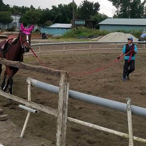 馬の学校の乗馬レッスン!高校生のレッスンに注目!