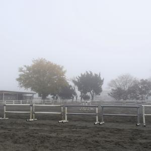 千葉にある馬の学校、濃霧で幻想的な馬場に変身・・・!
