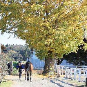 馬と風を切って走る専門生のモンキー騎乗!&馬と楽しむジュニアレッスン!
