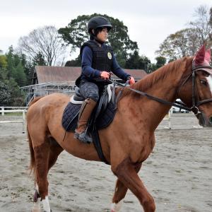 自分のペースに合わせて、乗馬技術を磨きます!