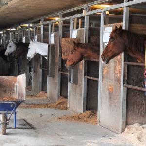 2歳馬が初めての削蹄に挑戦!&馬たちへプレゼントが届きました☆