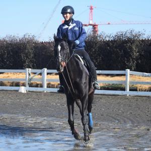 馬の学校、馬もネコも元気に活動中です!