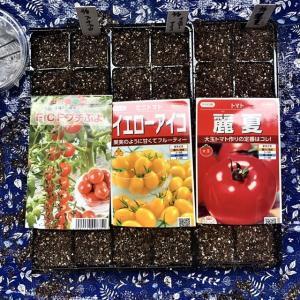 トマトの発芽状況…我が家の育苗設備