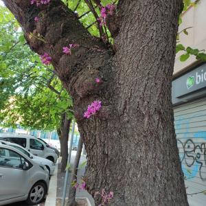 この木も気になる木