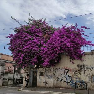 花と壁のギャップが。。