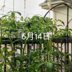 水耕栽培は簡単