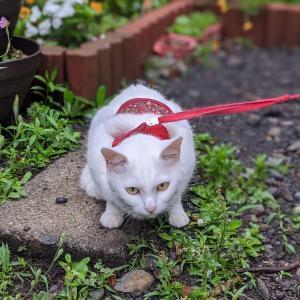お猫さま、お庭へどうぞ