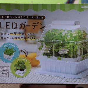 LEDガーデンで苗作り