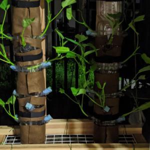 タワー型水耕栽培に期待