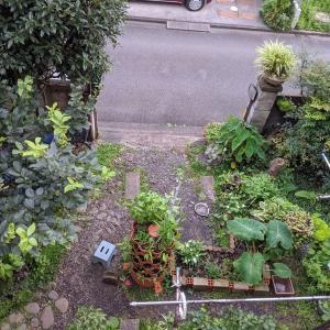 梅雨明けのお庭