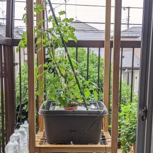 栽培槽に養液をためる|トマトの水耕栽培