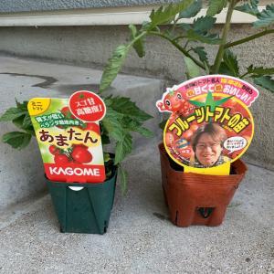 今年の菜園スタート