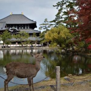 紅葉と黄葉のころ ~奈良公園散策