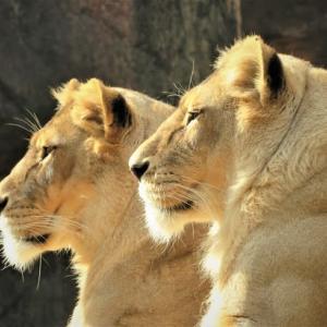 天王寺動物園 ① ~都会の中のサバンナ