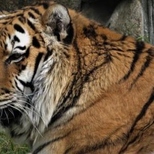 天王寺動物園デジスケッチ ② ~囚われの身・生きる術
