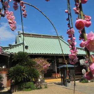 春の歌 ~平野郷から長居公園