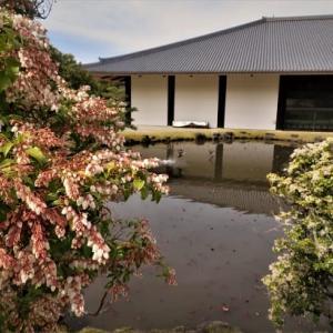 馬酔木(あせび)の咲くころと鹿たち ~奈良公園