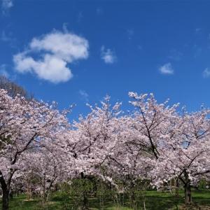 桜風景デジスケッチ ② ~長居植物園