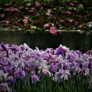 初夏の空へ ~長居植物園の花たち