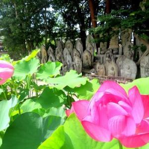 ハスの咲くころ ~喜光寺