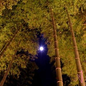 青い月に照らされた遠い遠い道  ~孤独な旅路