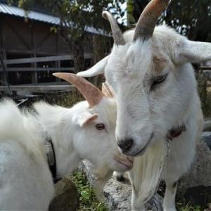 植村牧場の幸せな動物たち ~般若寺町