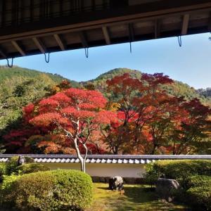 海住山寺の紅葉 ② ~本坊庭園にて秋を愛でる