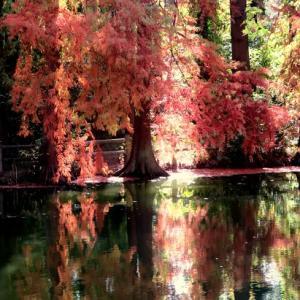 深まる秋に寄せて ~長居植物園