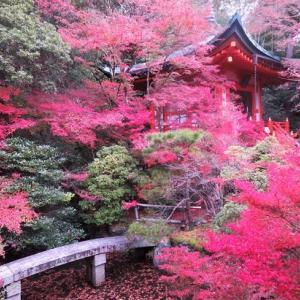 山科・毘沙門堂の紅葉 ② ~弁天堂と晩翠園