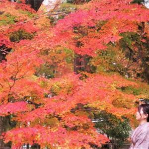 南禅寺の紅葉 ~天授庵と三門あたり