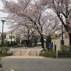 桜 &   志村けん