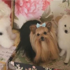 テレビ東京で羊毛フェルトを見て