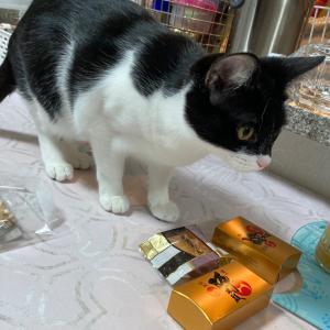 熊本のお菓子に興味しんしんのくうさん