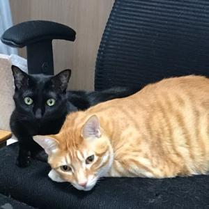 在宅ワークと猫。